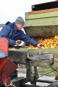 Chaine de fabrication du jus de pomme artisanal. Les Vergers d'Oléron-Dolus d'Oléron